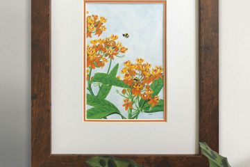 Orange Milkweed Art