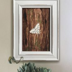 Phantom Hemlock Looper Moth in Frame