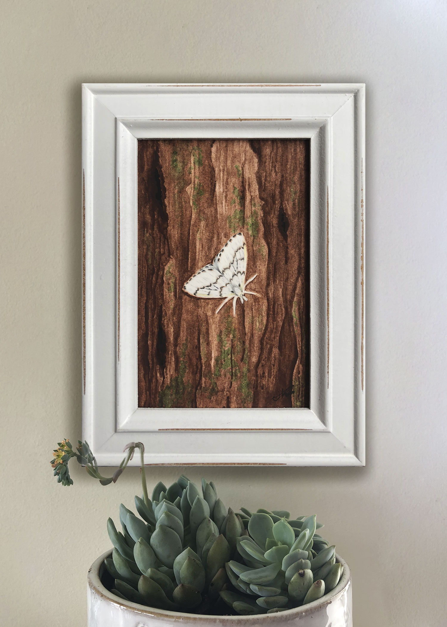 Phantom Hemlock Looper Moth in Frame