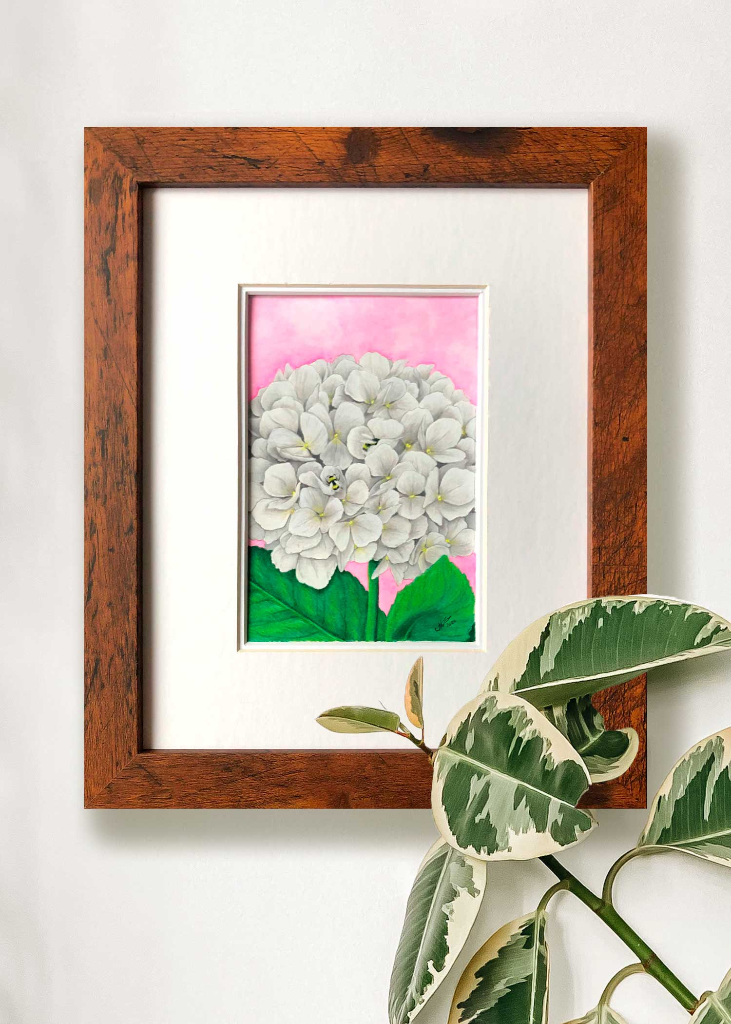 Framed White Hydrangea Painting