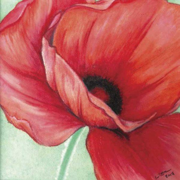 Pale Red Poppy