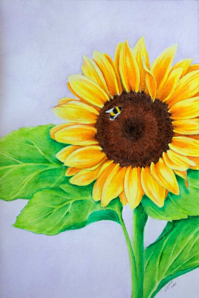 Yellow Sunflower with a bumblebee