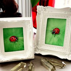 Ladybug Paintings